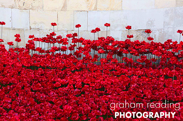 Poppies_Blog_1